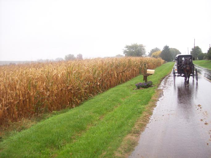 Sc_Amish